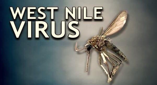Muỗi mang virus West Nile tại Mỹ