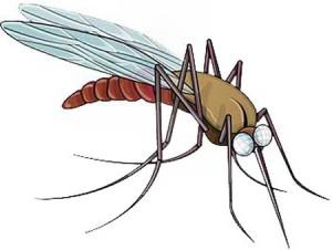 Cách chữa vết sưng do muỗi đốt cho bé hiệu quả bằng hành và tỏi