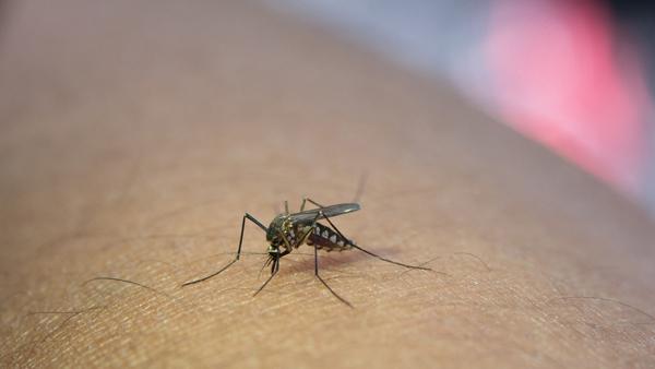 Nguyên nhân gây bệnh sốt xuất huyết là muỗi