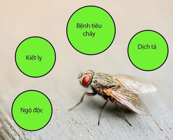 Tác hại của côn trùng đối với nhà bếp