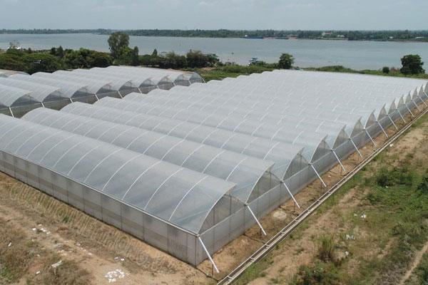 Ứng dụng cửa lưới chống côn trùng trong nông nghiệp