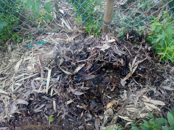 Ấu trùng thường sống trong tầng lá mục
