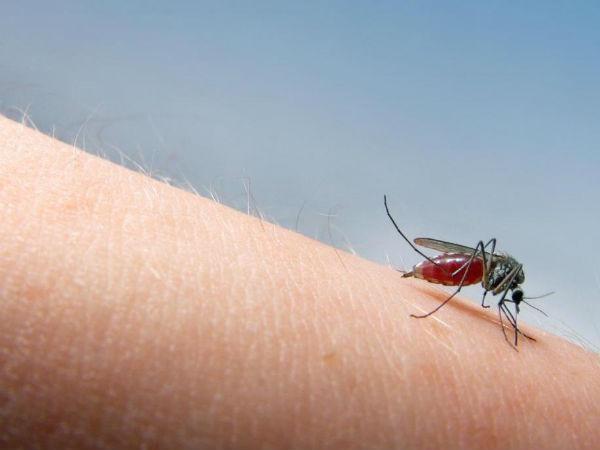 Chống muỗi đốt