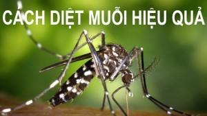 cách đuổi muỗi đơn giản mà hiệu quả nhất