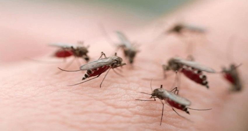 chống muỗi tự nhiên