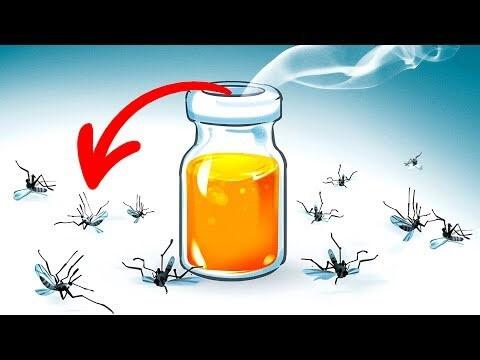 cách đuổi ruồi muỗi ra khỏi nhà