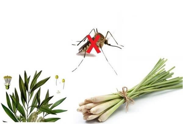 Đuổi ruồi muỗi kiến gián