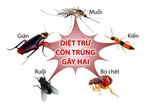 Một số côn trùng gây hại thường gặp