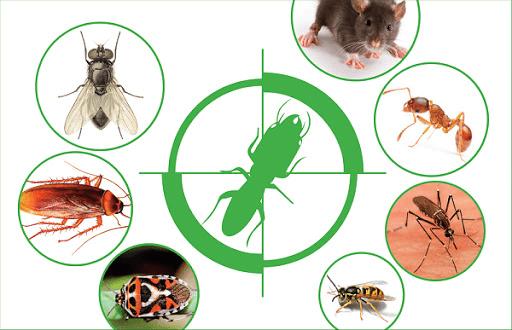 côn trùng cắn nổi mẩn đỏ