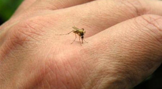 Muỗi cắn bị bầm tím