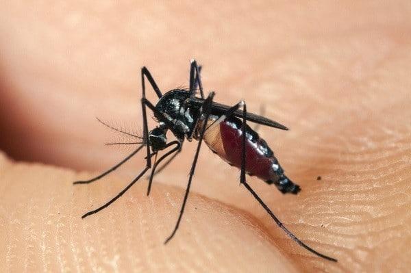 muỗi đốt để lại chấm đỏ