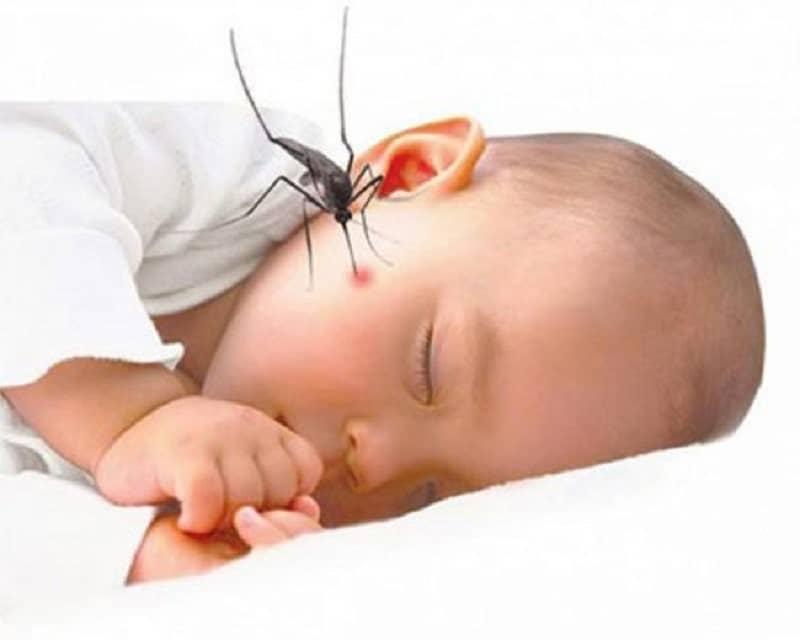 Muỗi cắn trẻ sơ sinh
