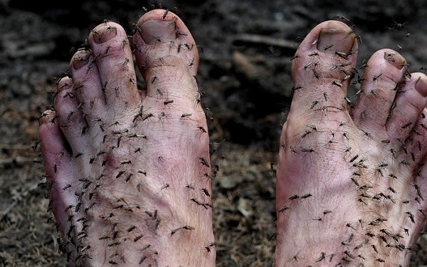Loại bỏ ngay hiện tượng bị muỗi đốt nhiều
