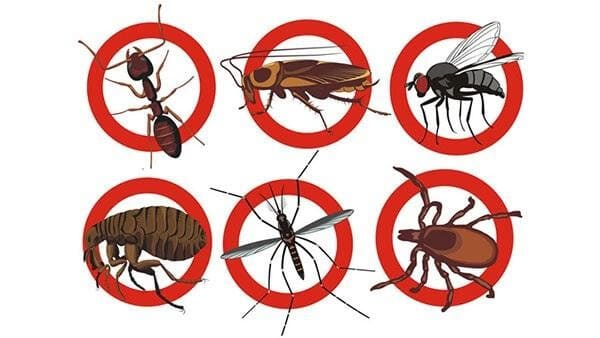 Cửa lưới giúp ngăn muỗi và nhiều loài côn trùng