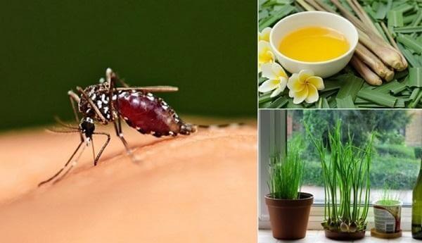 Mẹo đuổi muỗi hữu ích cho bạn trong cuộc sống